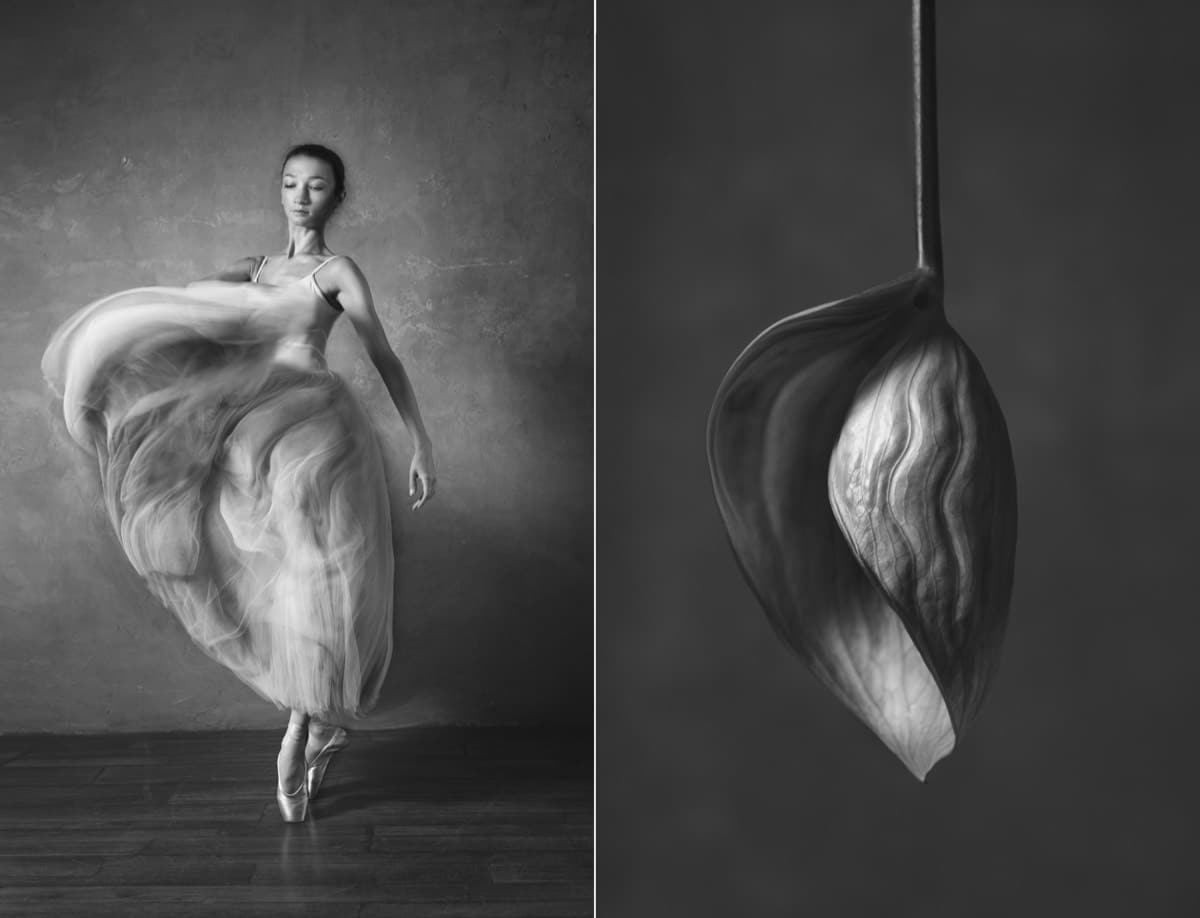Poses of Ballet Dancer and a Flower Compared