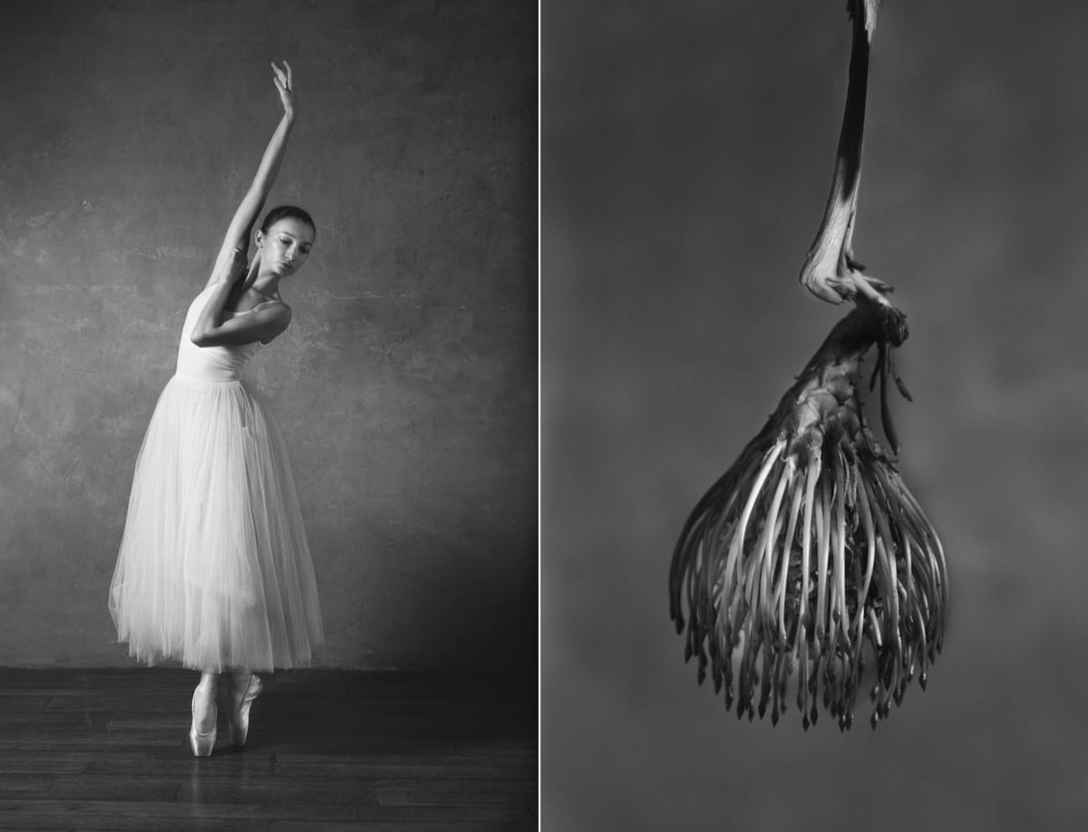 Ballet Dancers and Flowers by Yulia Artemyeva