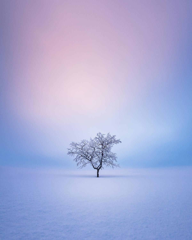 Lone Tree in Wintery Landscape