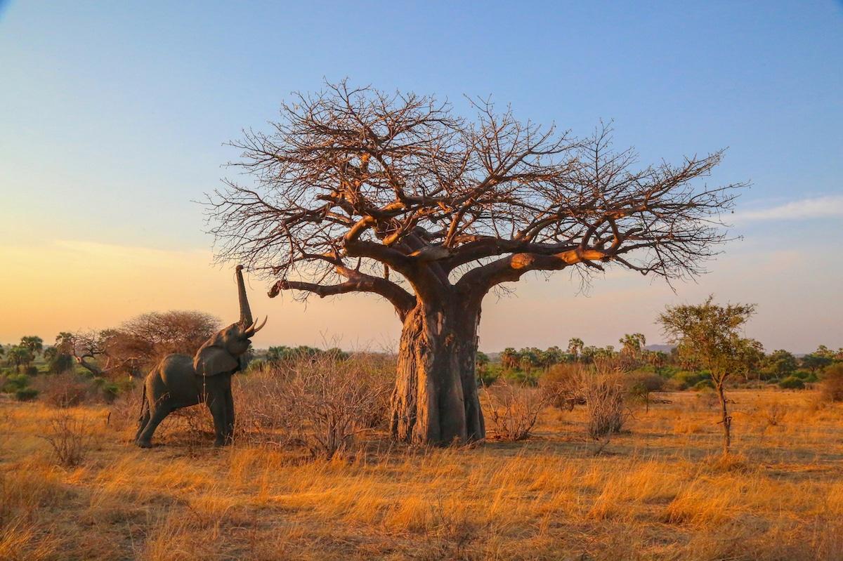 Foto de un elefante en África por Graeme Green