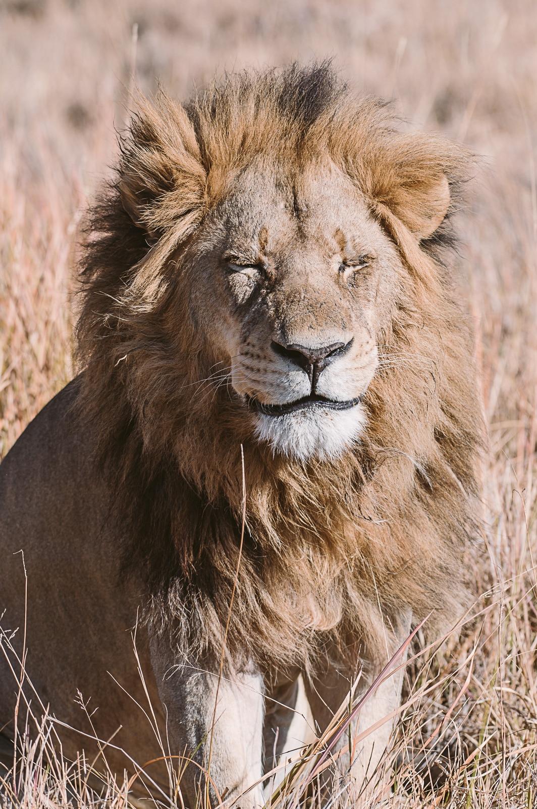 León en África por Marion Payr