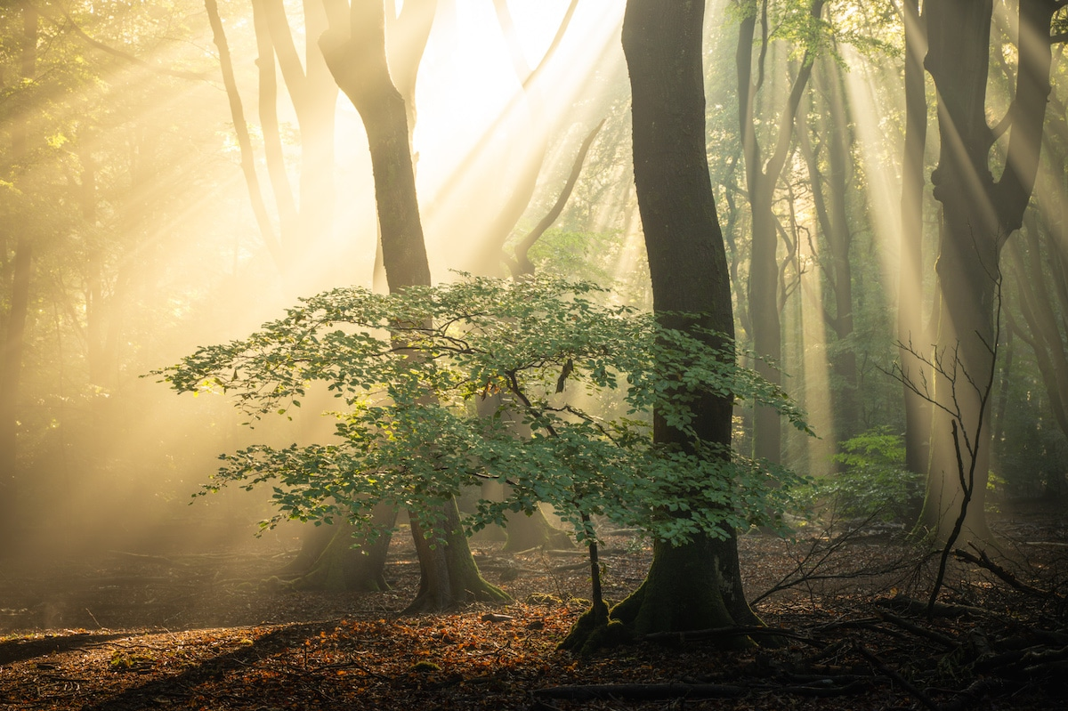 Sunlight Streaming Through the Trees