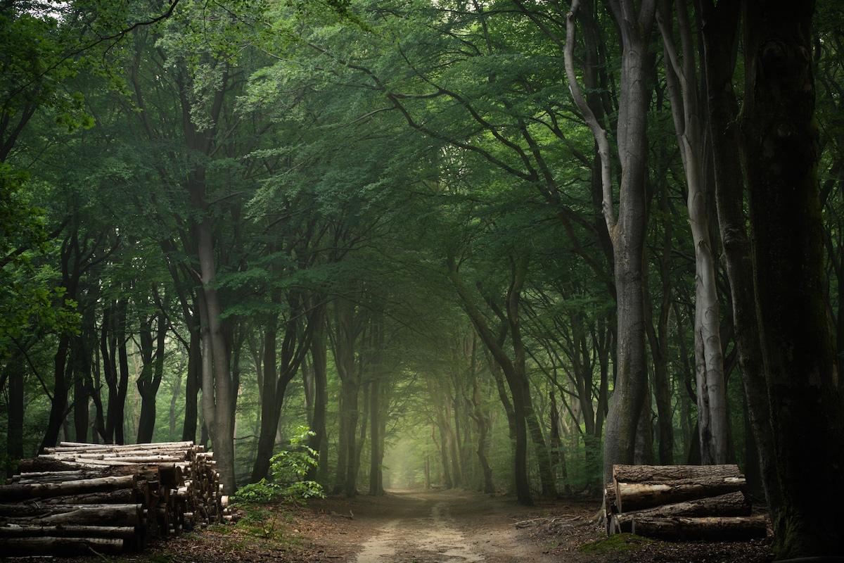 Path Through a Green Forest