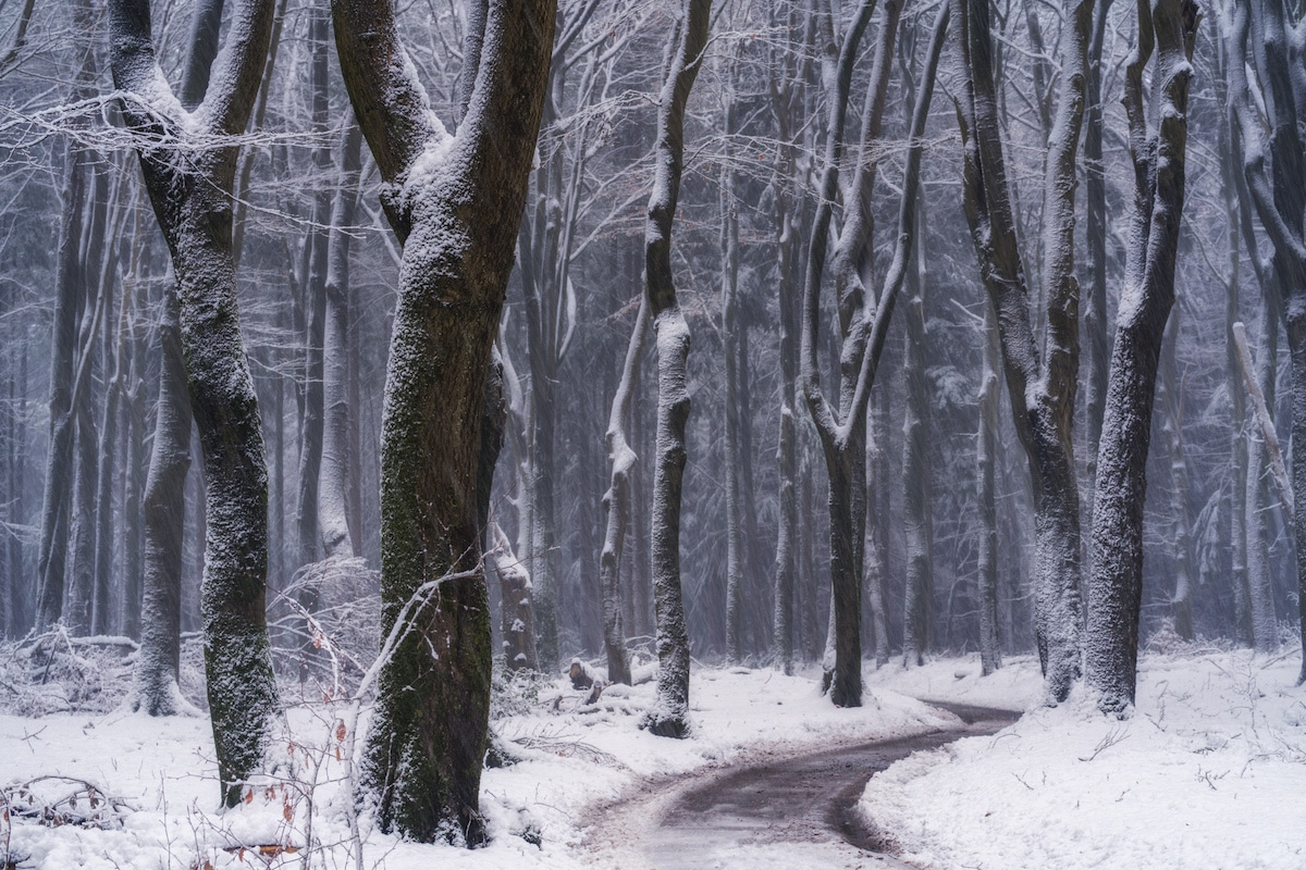 Winter Path in the Woods