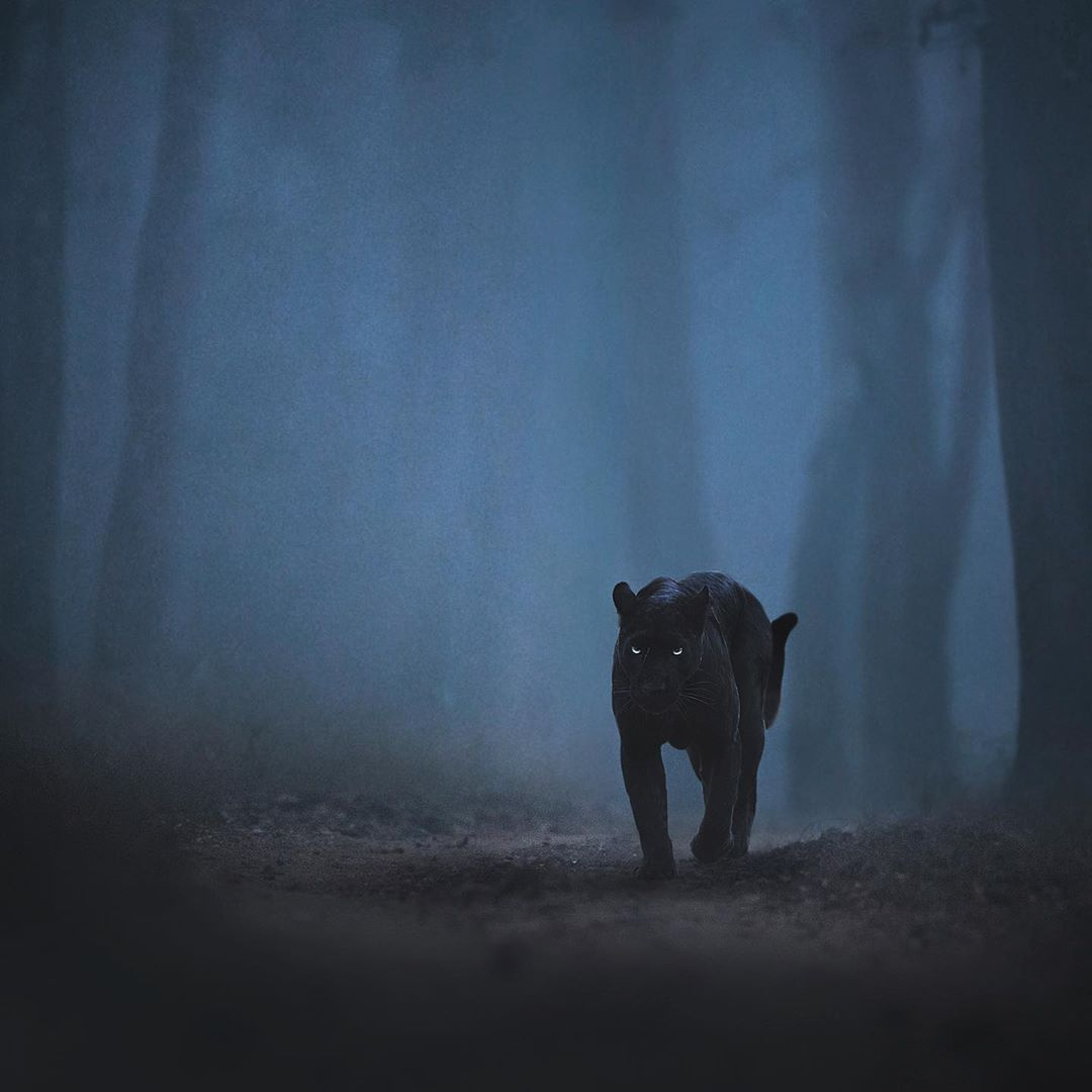 Wildlife Photography by Shaaz Jung