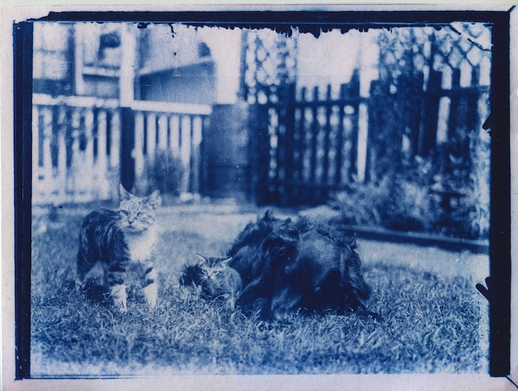 Cyanotype Cat Photo from Time Capsule