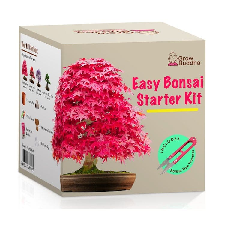 Grow Your Own Bonsai Kit