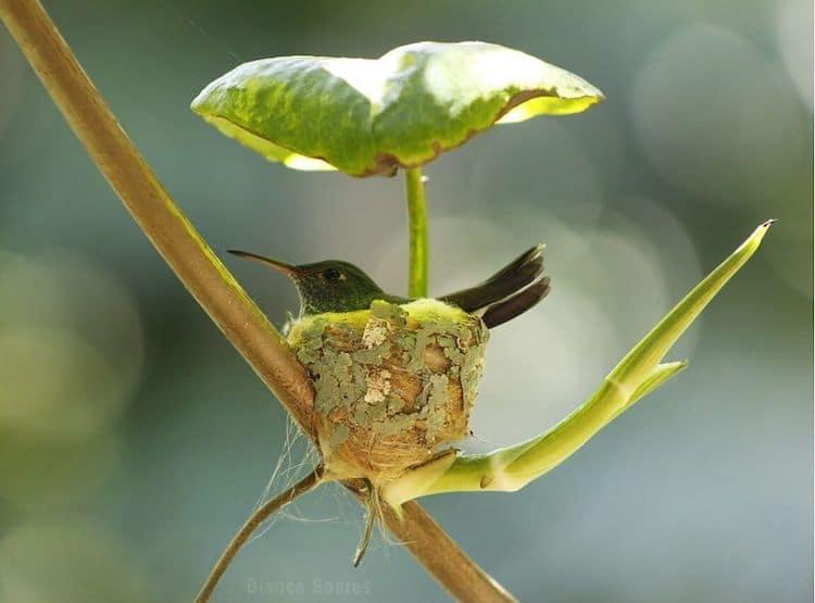 Hummingbird Nest With Roof