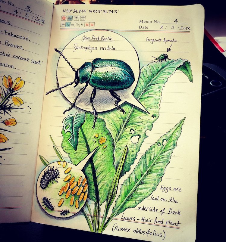 Nature Journals by Jo Brown