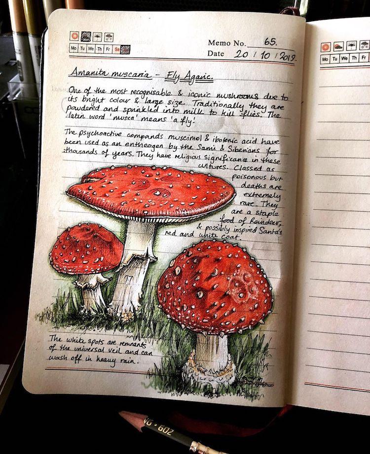 diario ilustrado con dibujos de naturaleza