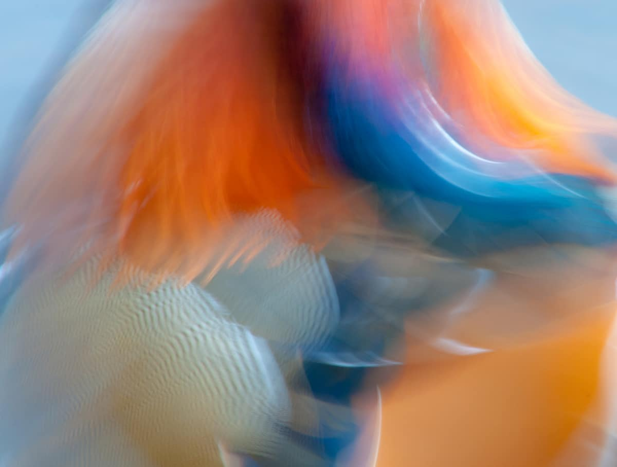 Abstract Photo of Mandarin Duck