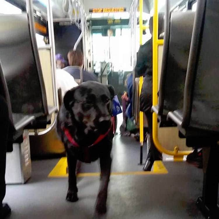 Eclipse the dog walking on the bus