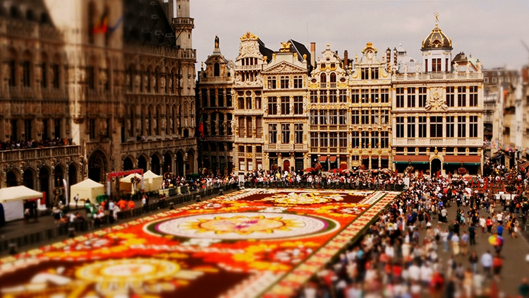 Joerg-Daiber-Brussels-Flower-Carpet