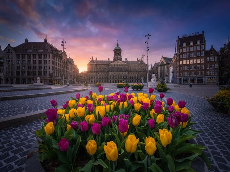 Tulips in Amsterdam's Dam Square