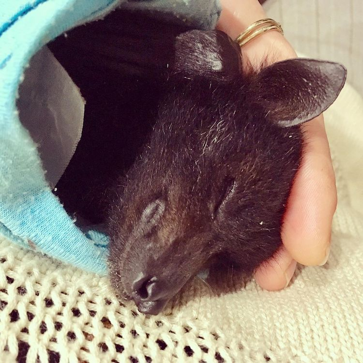 Cute Sleeping Bat