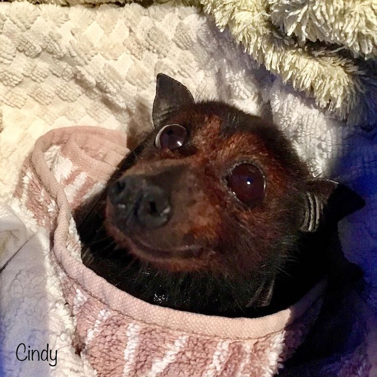Adorable Smiling Bat