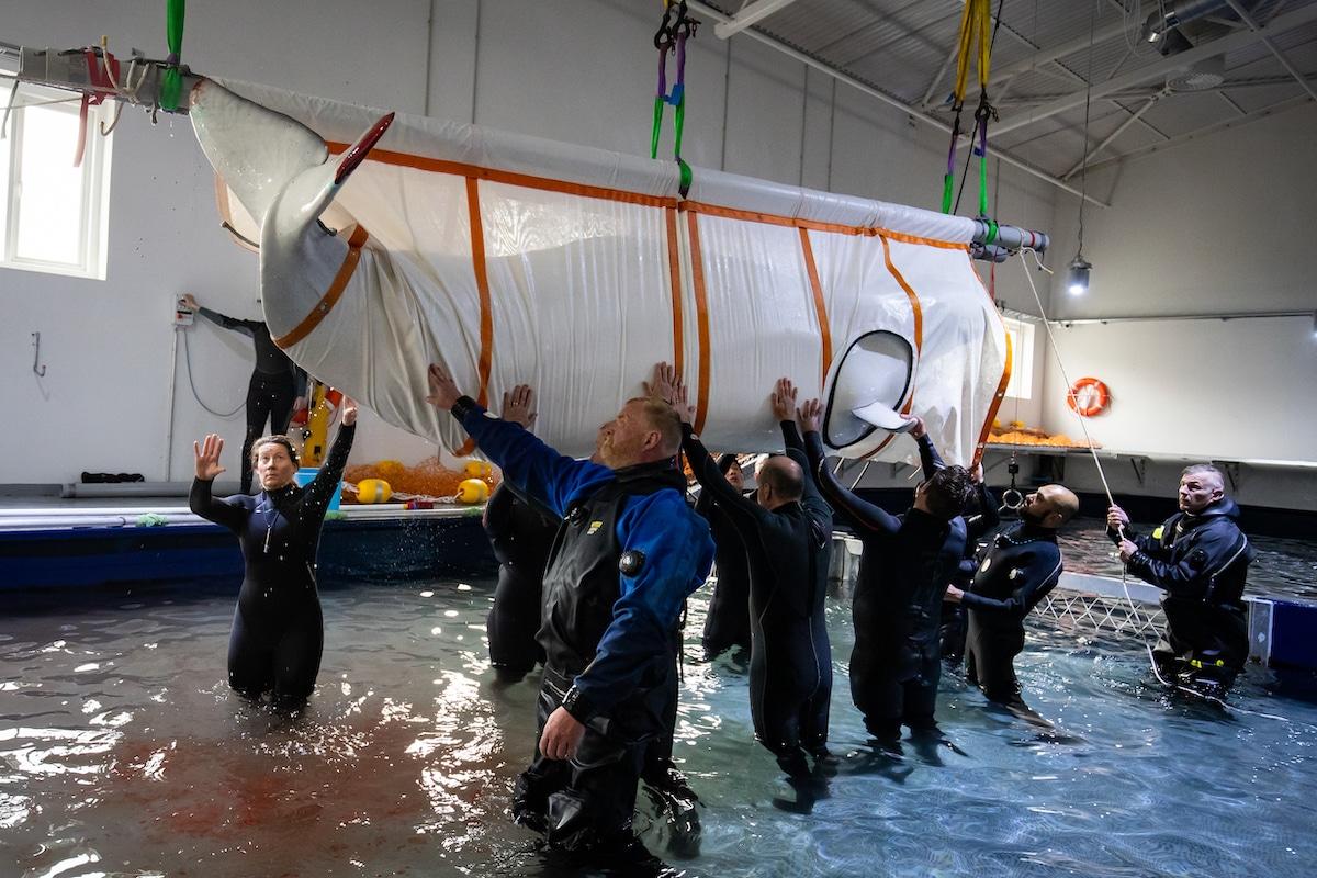 Beluga Whale Rescue