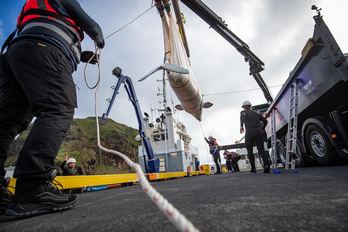 Rescate de dos belugas