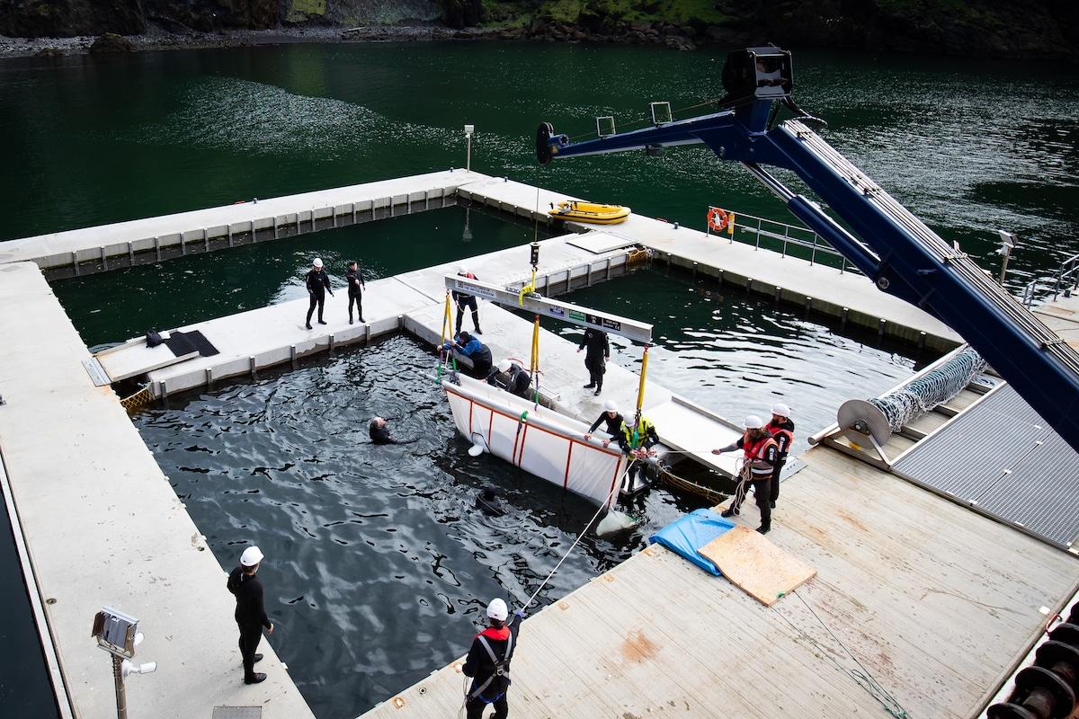 Rescate de belugas