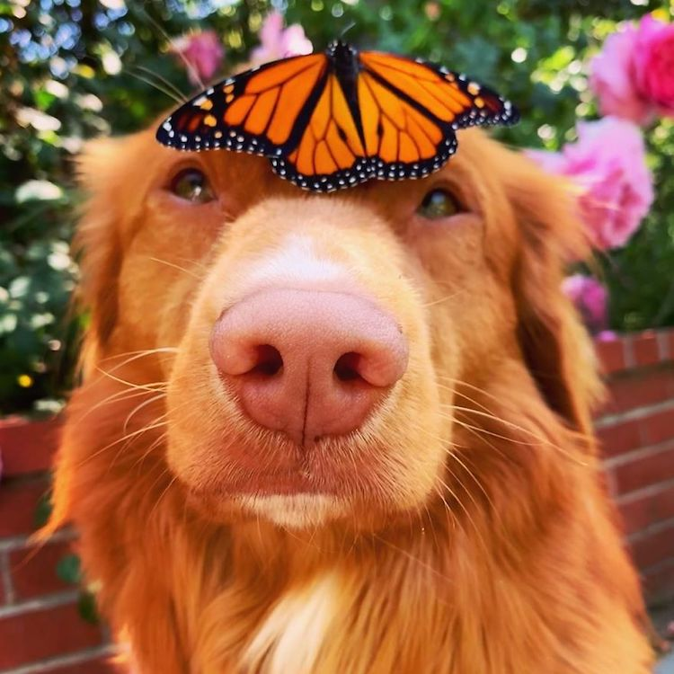 Milo the Dog Loves Butterflies