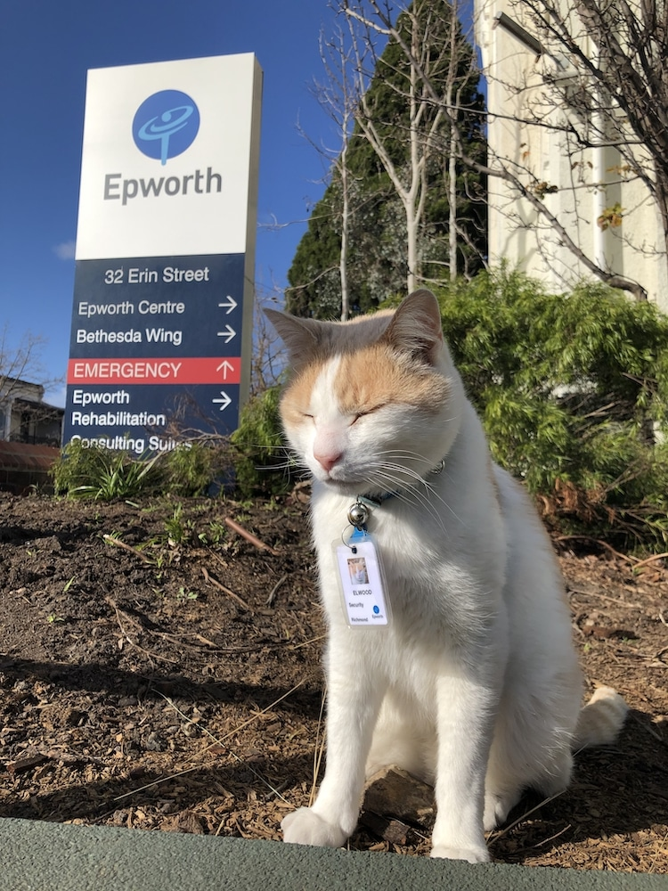 Hospital Uses Cat as a Security Guard