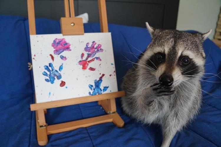 pinturas por mapaches