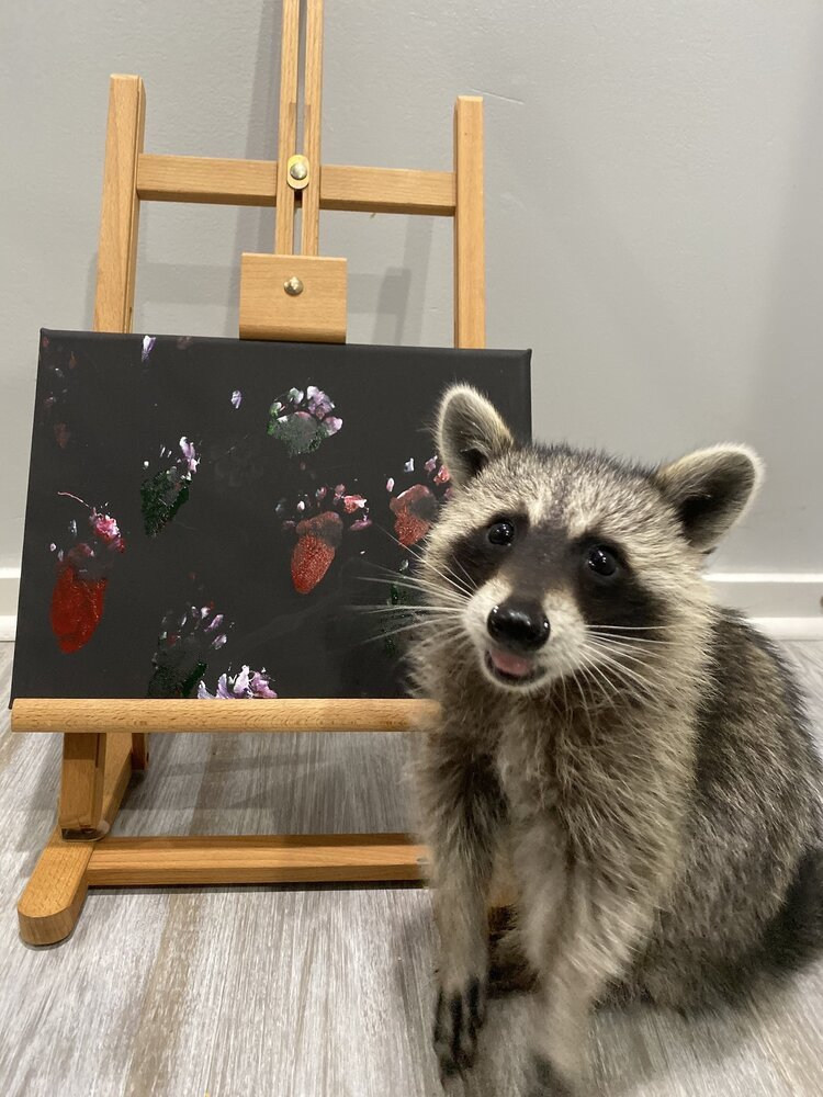 Raccoon Artwork