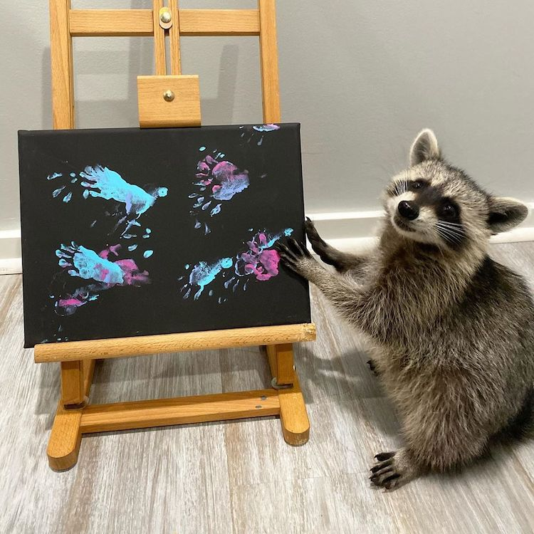 Paintings by a Raccoon