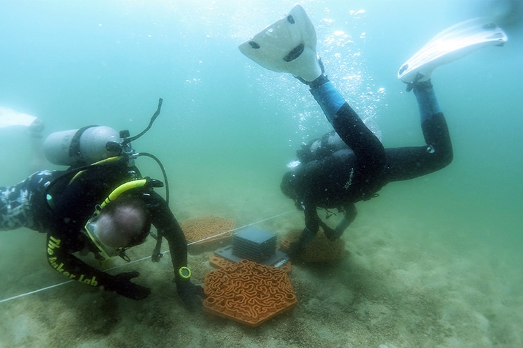 Divers Placing A Terra-Cotta Roof Tile
