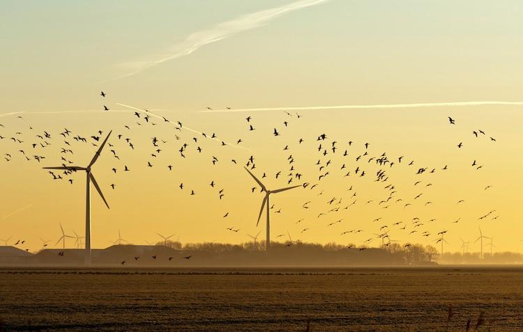 Aves volando en un parque eólico