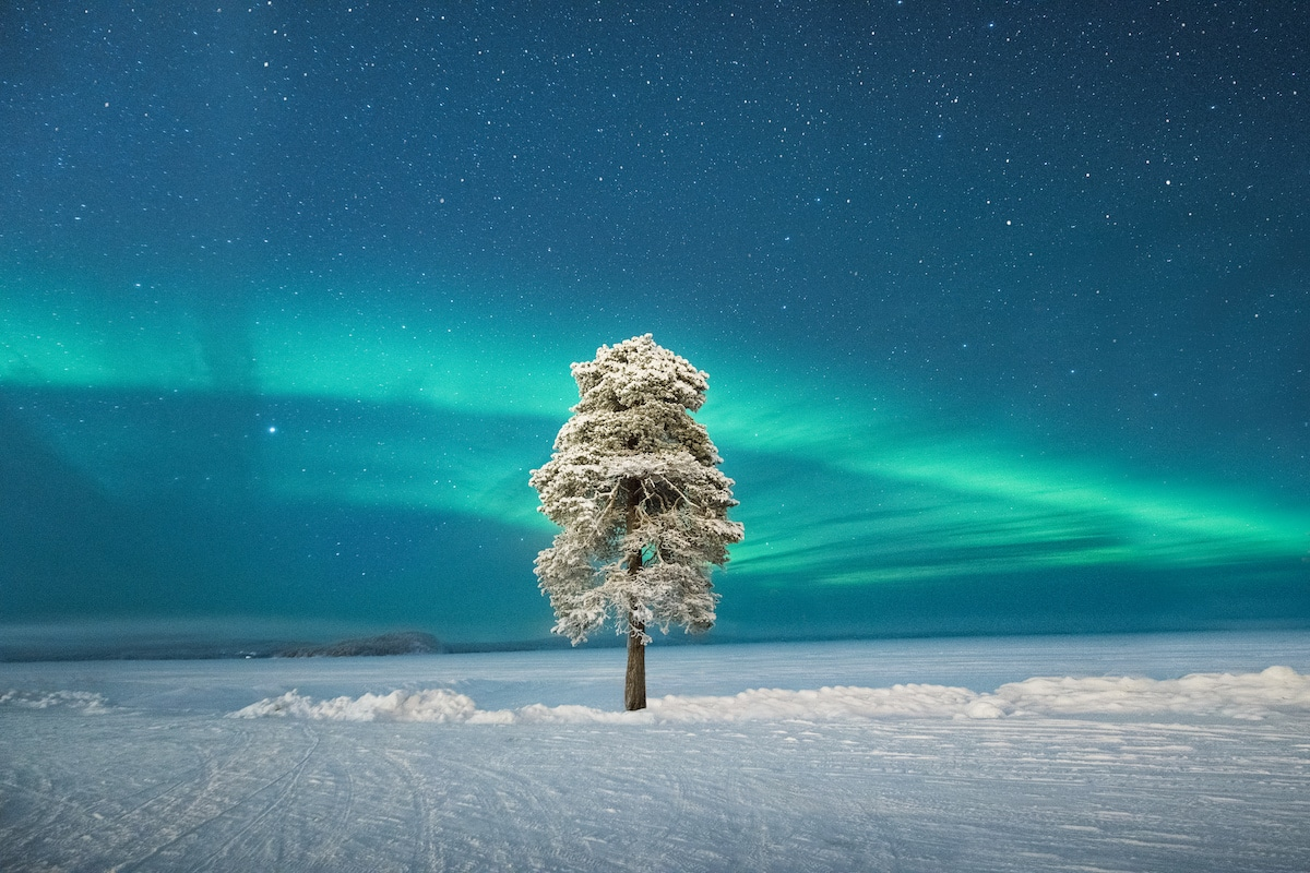 Lone Tree in Lapland with the Northern Lights