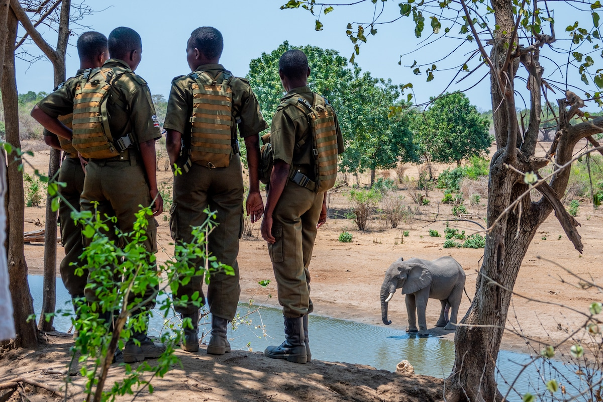 Akashinga Rangers Watching an Elephant at a Watering Hole