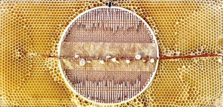 Mixed Media Art with Bees by Ava Roth