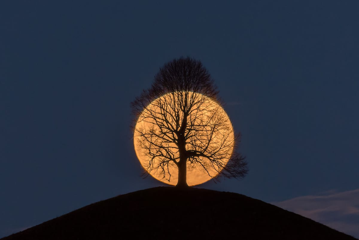 Full Moon Centered Behind a Tree