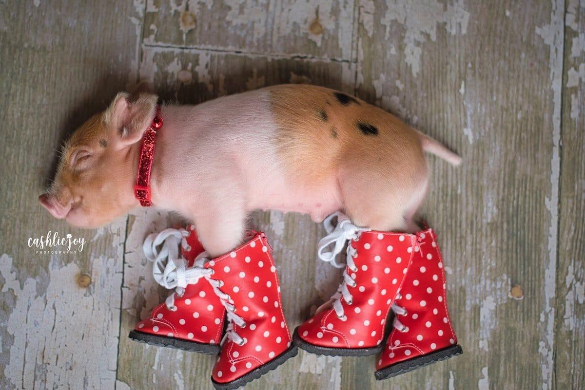 Adorable Piglet Photo