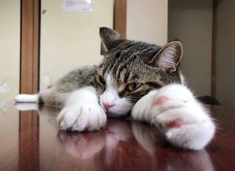 gato de posada My Cat Yaguwara en Japon