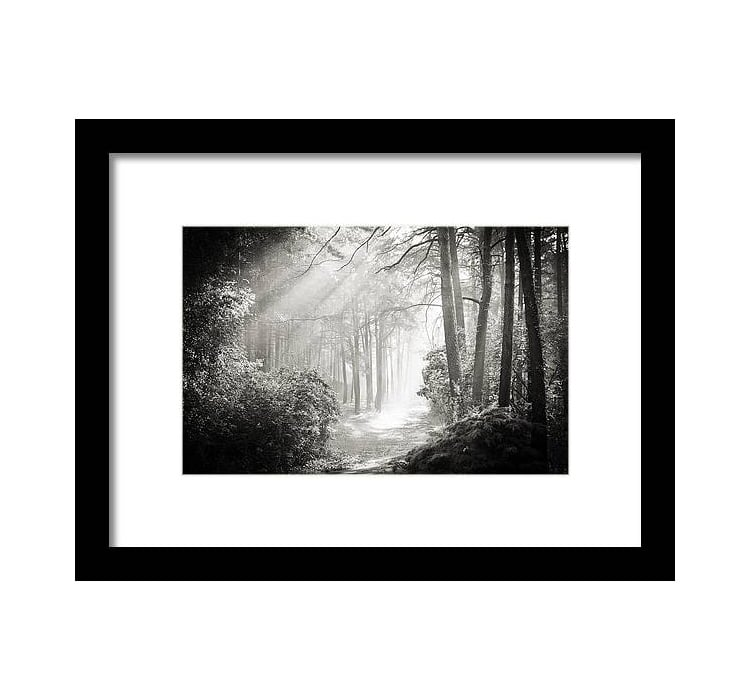 Black and White Forest Framed Art Print
