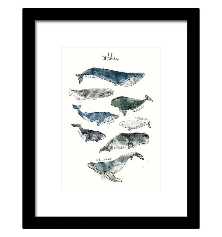 Whale Illustration by Amy Hamilton