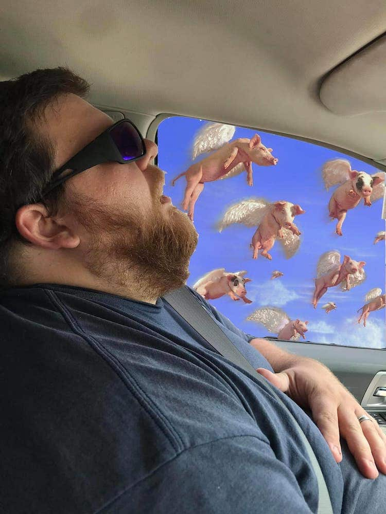 Man Sleeping With Pigs Behind Him