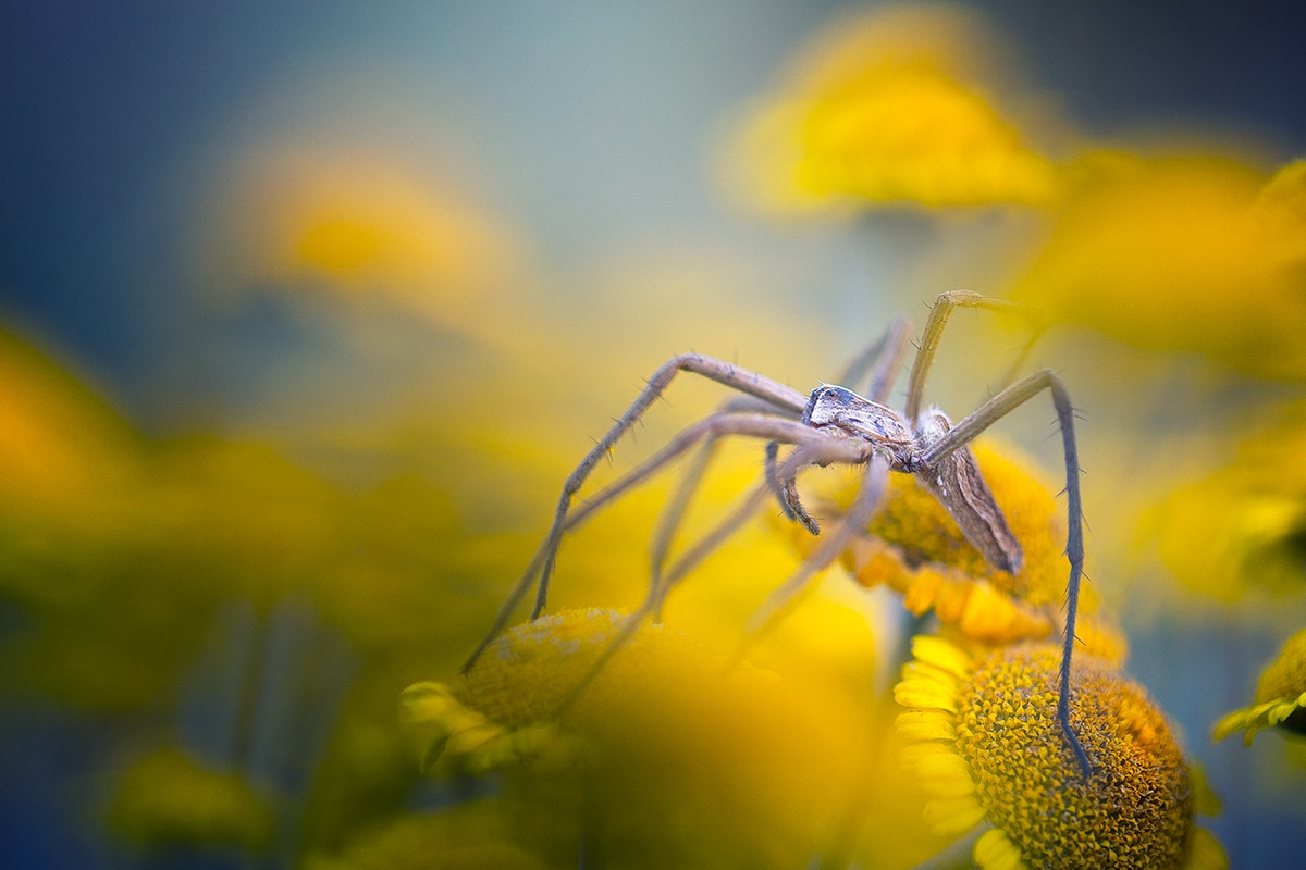 Macro Photo of a Spider on a Flower