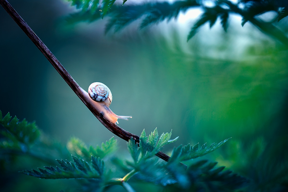 Macro Photo of a Snail on a Branch