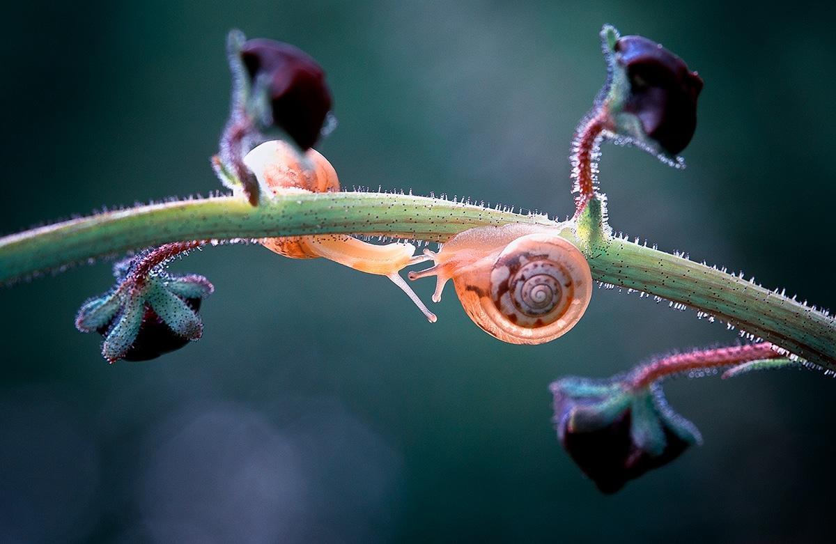 Georgi Georgiev - Macro Photography of Snail