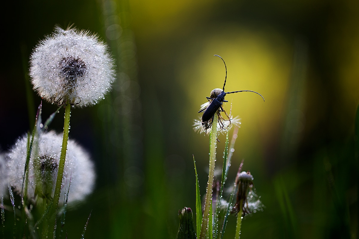 Marco Photography of Insects