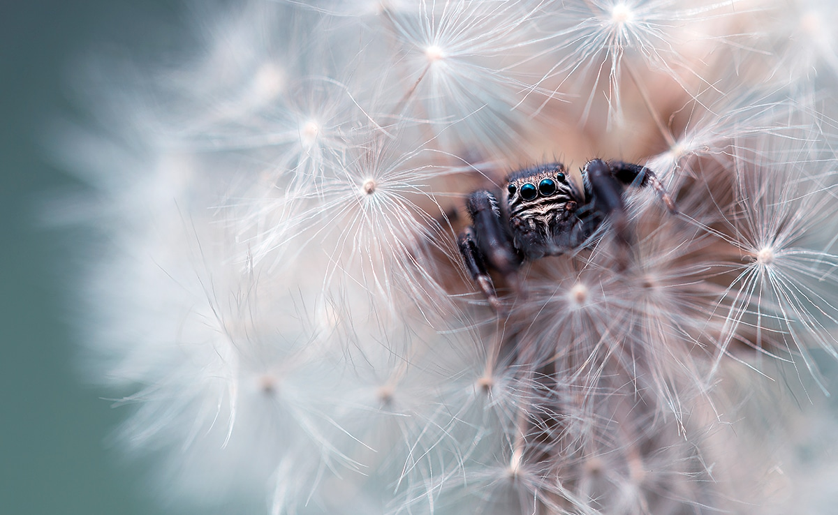 Macro Photo of a Spider