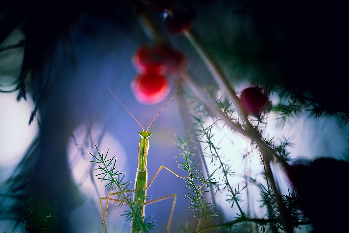 Insect Macro Photography by Georgi Georgiev