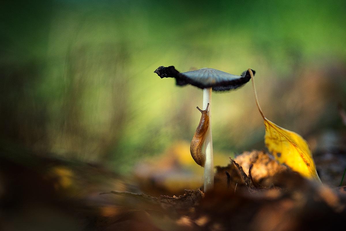 Slug Crawling Up a Mushroom