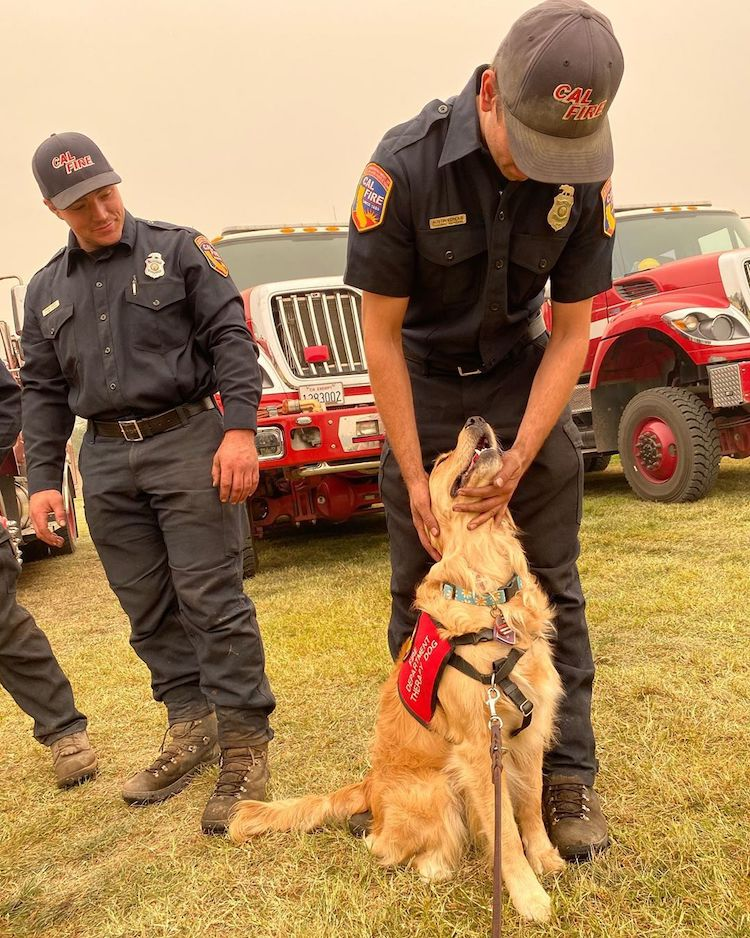 Kerith The Golden Retriever Therapy Dog Comforts Firefighters in California