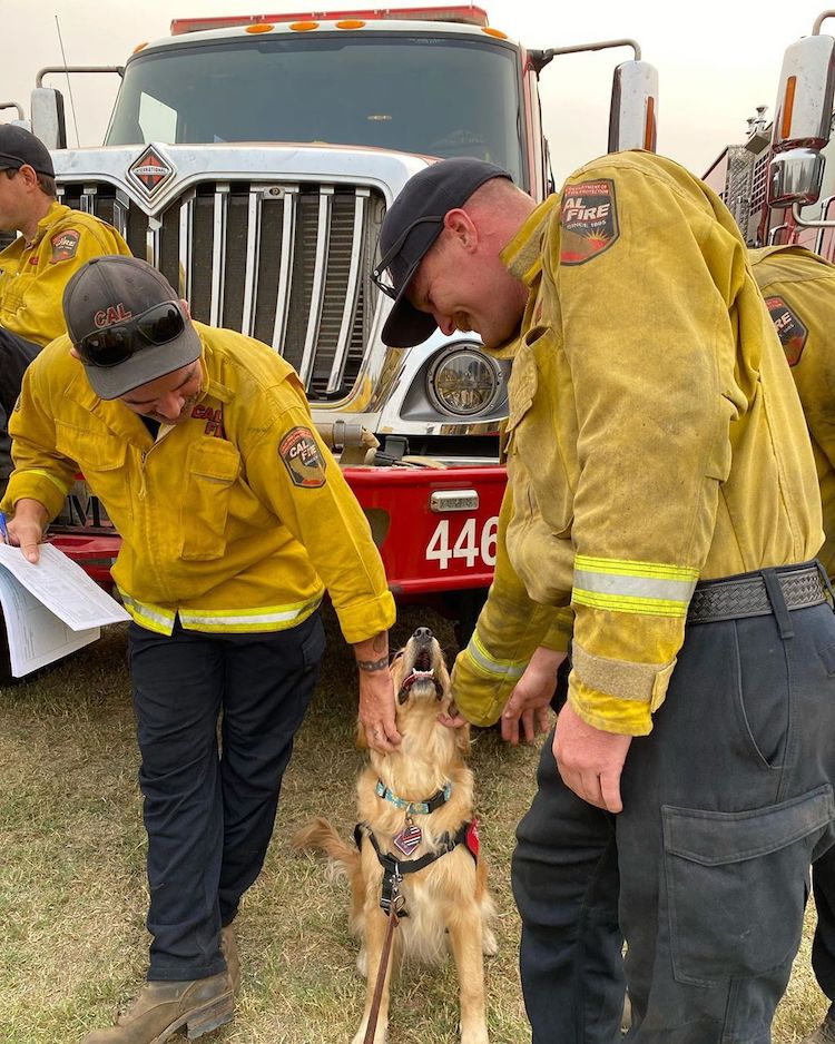 Therapy Dog Comforts Firefighters in California