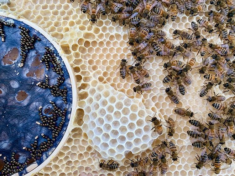 Bees On Indigo Encaustic