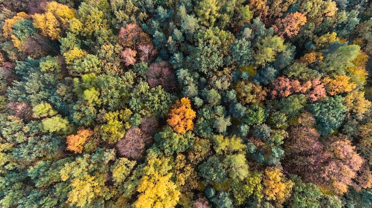 Sonidos del bosque
